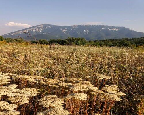Hajdučka trava sa regiona Rtnja
