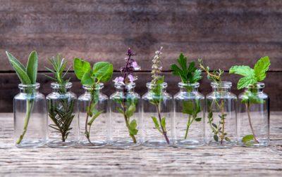 Lekovite organske biljke protiv masne kože