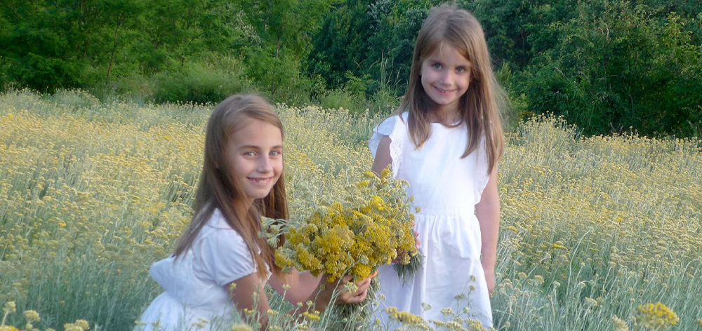 Young and pure Helichrysum - Smilje